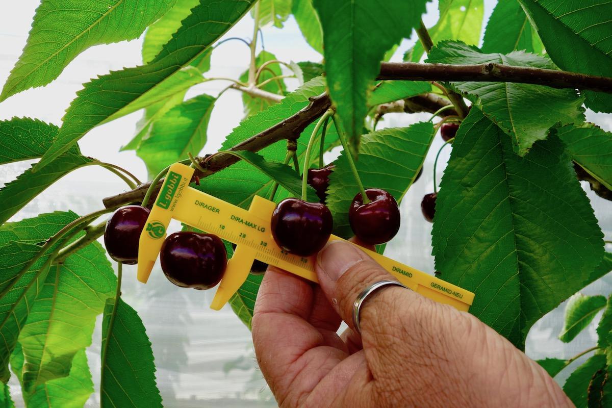 Бизнес план черешневый сад успешные бизнеса идеи 2015